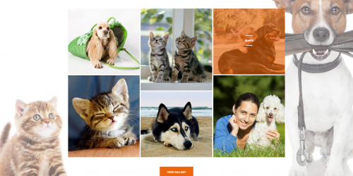 PetInn - Free Responsive Animals & Pets Charity WordPress Theme