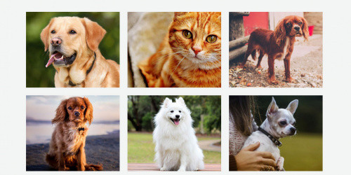 Petcare Lite - Free Pet Niche WordPress Business Theme