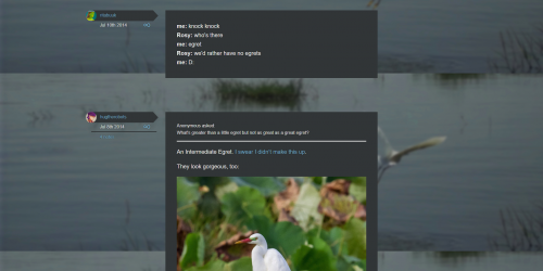 Egret - Tumblr theme for group blogs